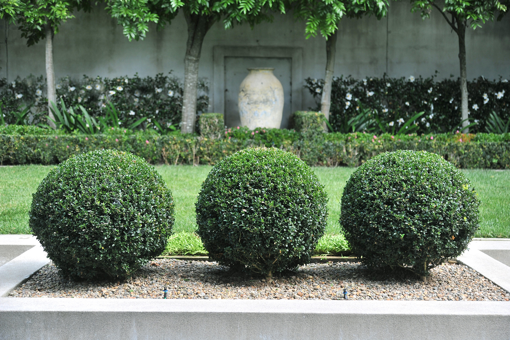 branche parnell buxus balls